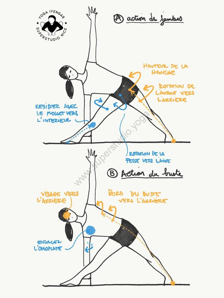 trikonasana-actions-yoga-iyengar